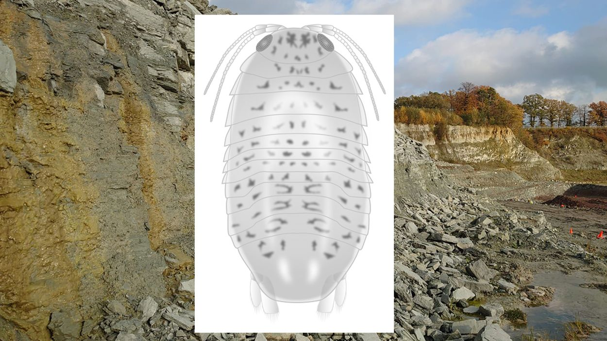 Winterswijk quarry with reconstruction drawing of Gelrincola winterswijkensis.  © Photo: Herman Winkelhorst, drawing by Erik-Jan Bosch (Naturalis Biodiversity Center)