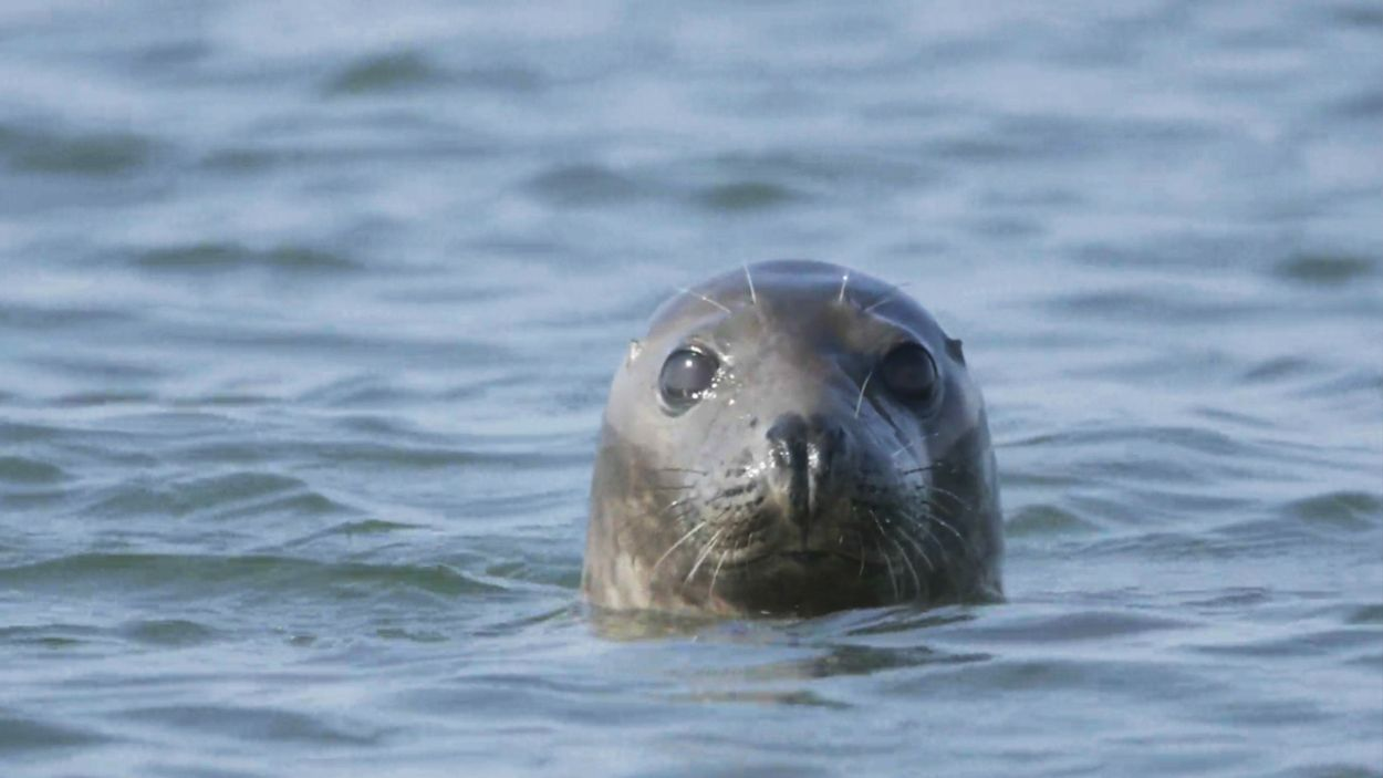 Afbeelding van De zeehond terug aan de top