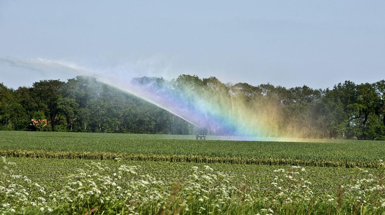 Afbeelding van Regen helpt niet: sproeiverbod in Achterhoek