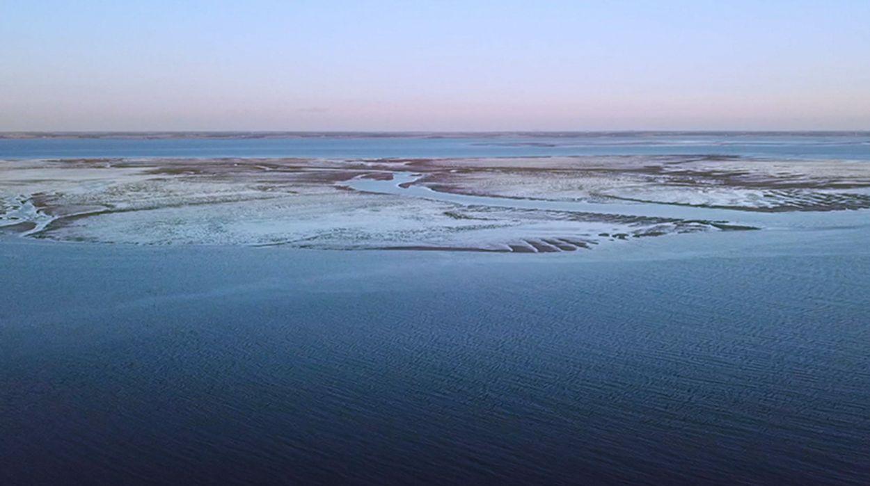Afbeelding van Butskoppen duiken op in de Oosterschelde