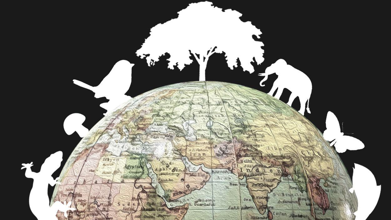 Afbeelding van VN-top over biodiversiteit in China