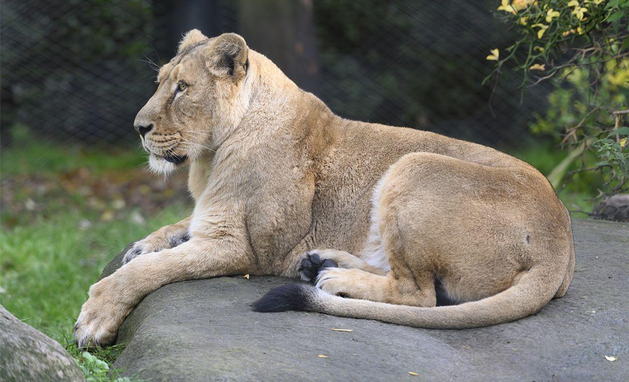Afbeelding van Volgende week coronasteun voor dierentuinen