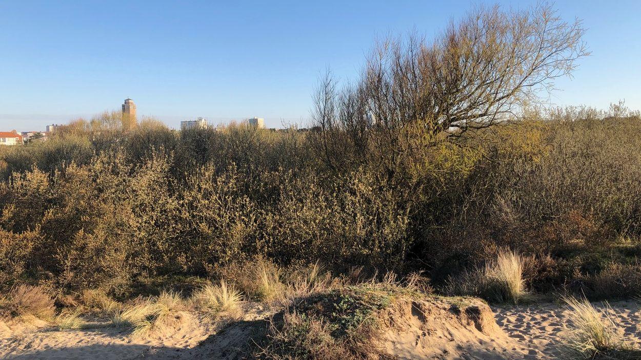 Nachtegalenduin bij Zandvoort (c) Rob Buiter