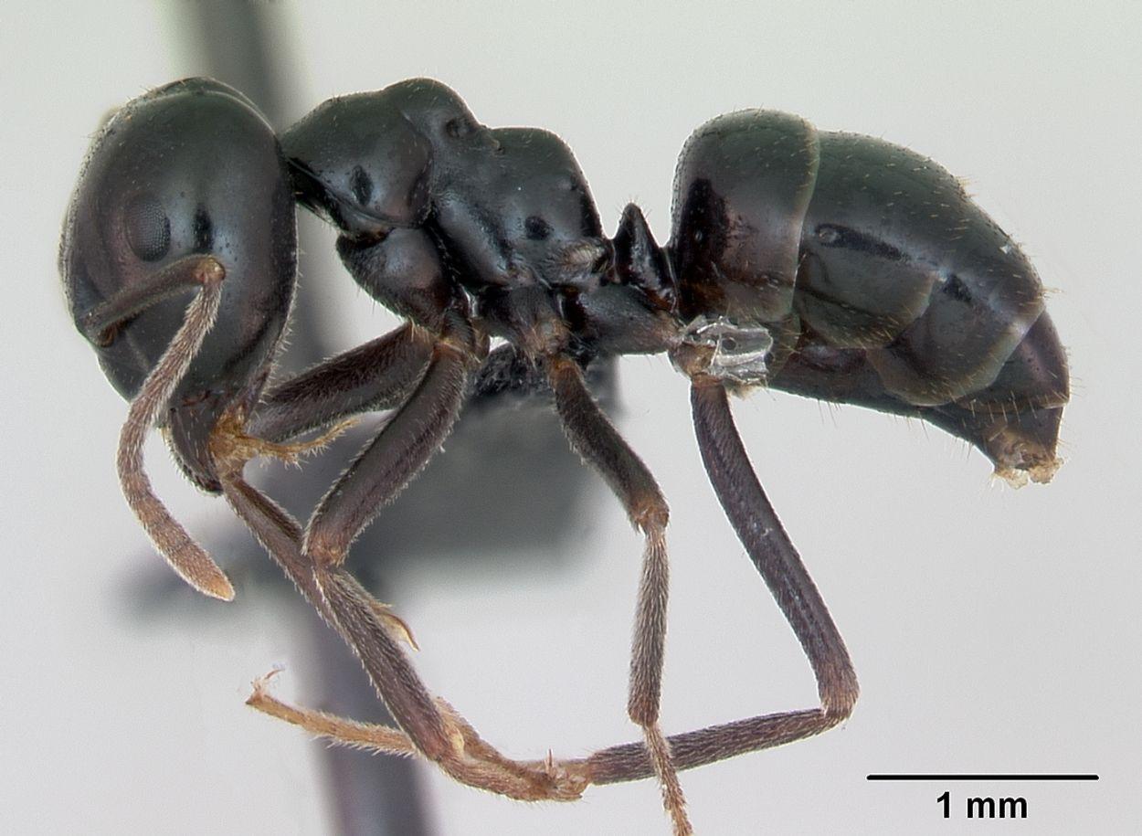 Afbeelding van Vraagbaak: waarom tikken mieren elkaar aan?