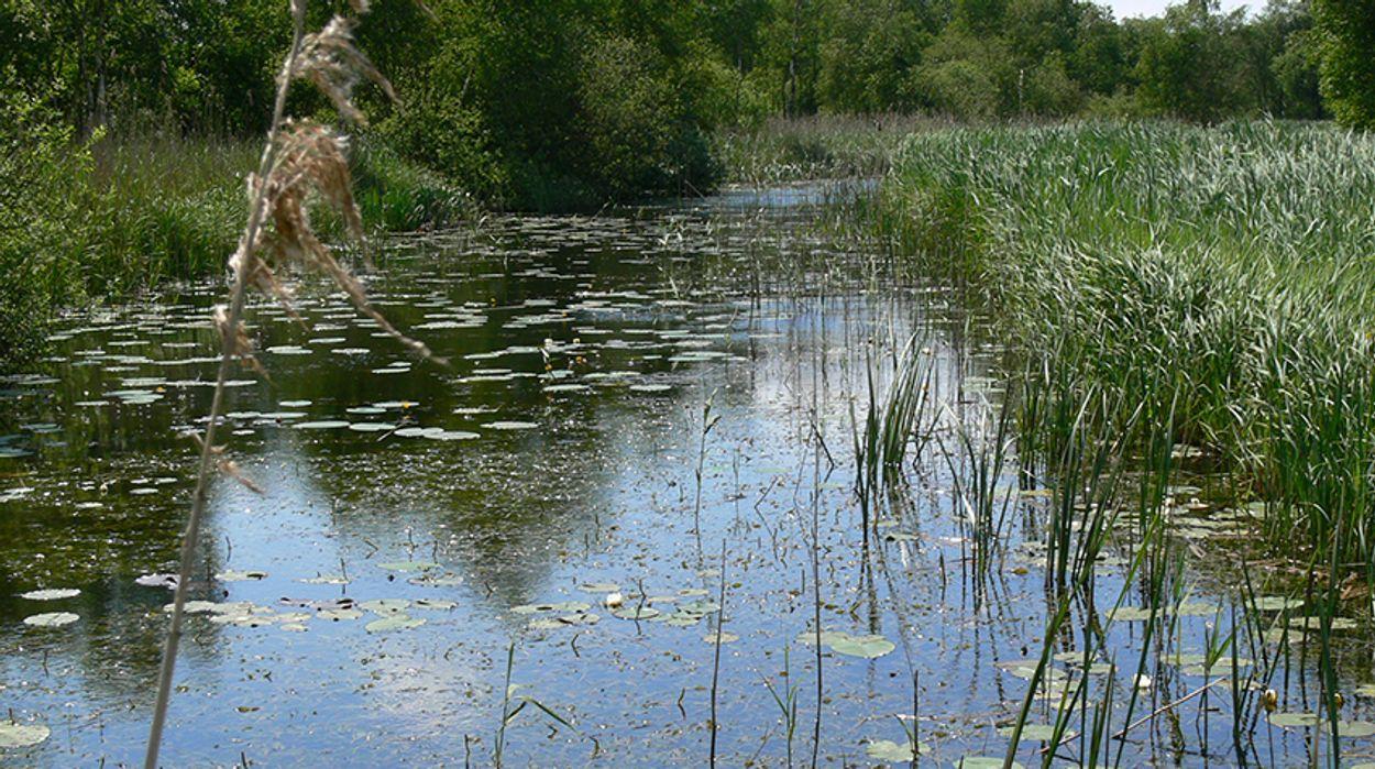 Afbeelding van 'Waterkwaliteit van veel sloten en vijvers onvoldoende'