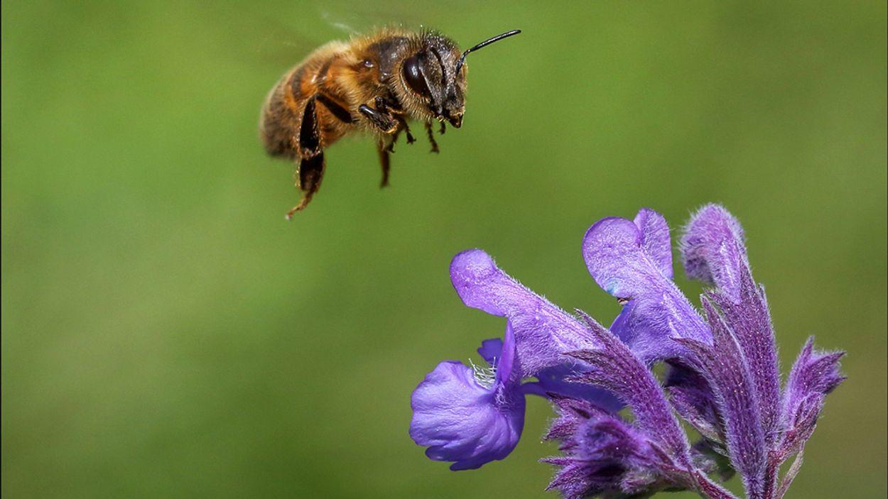 Afbeelding van Bijenoorlog, miniatuurBiesbosch en alle overige onderwerpen