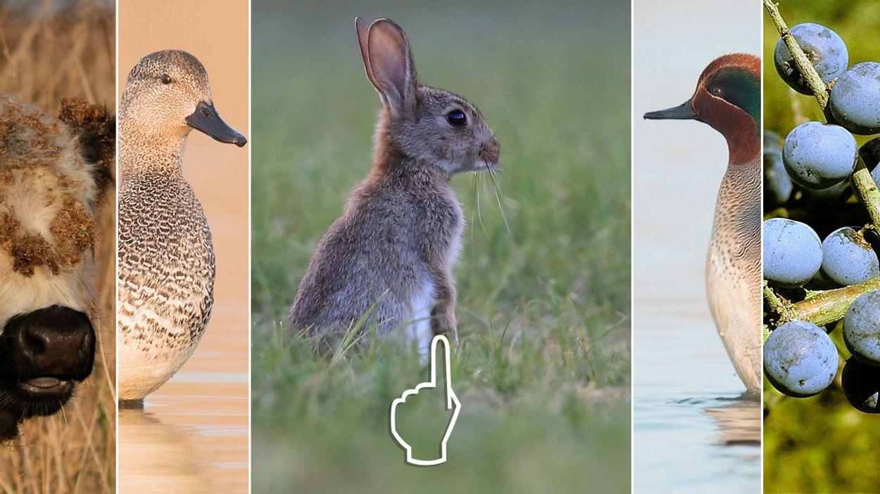 Afbeelding van Van konijn tot krakeend | Nu in de natuur