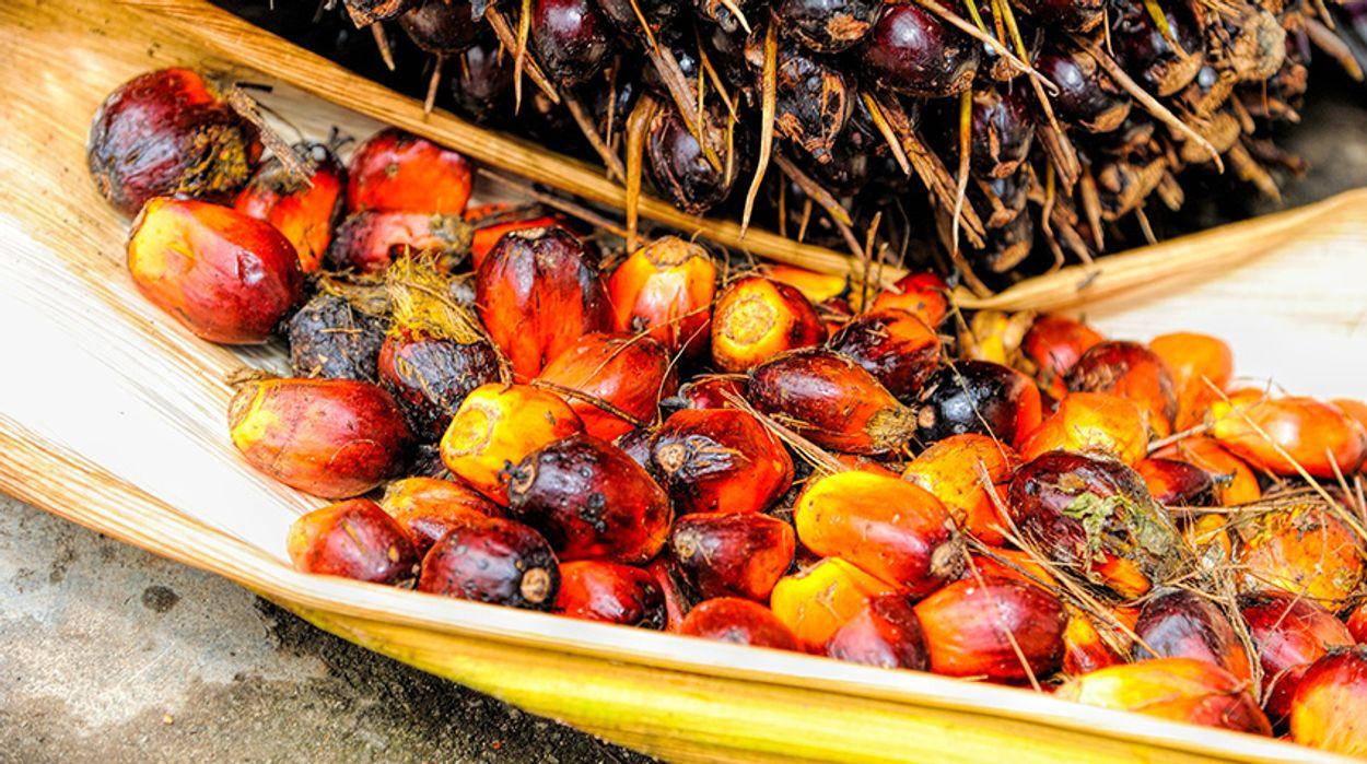 Afbeelding van Biobrandstof uit palmolie slechter voor klimaat dan diesel
