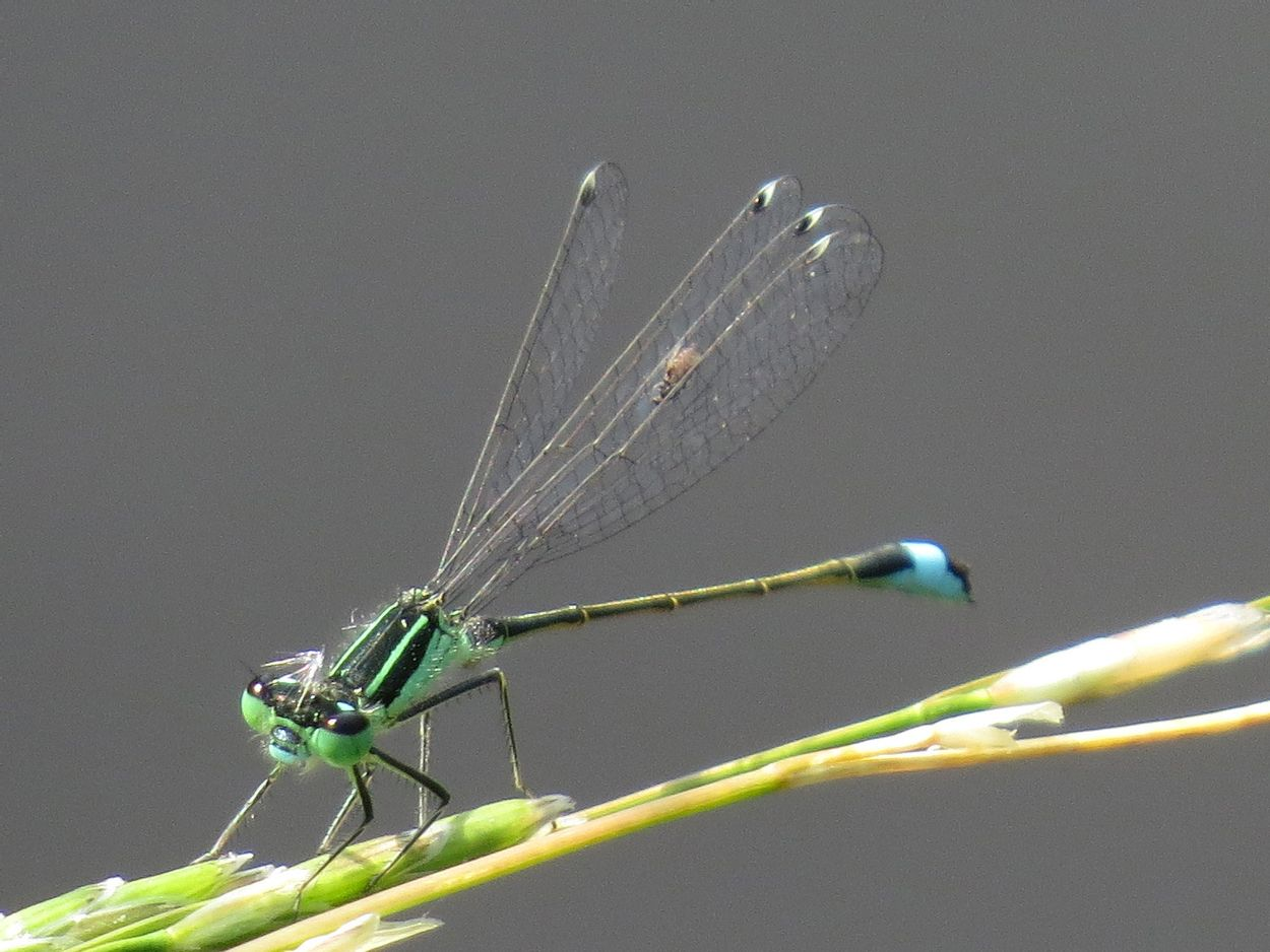 Afbeelding van Libellenknutjes, de fenolijn, de NJN bestaat 100 jaar en alle overige onderwerpen