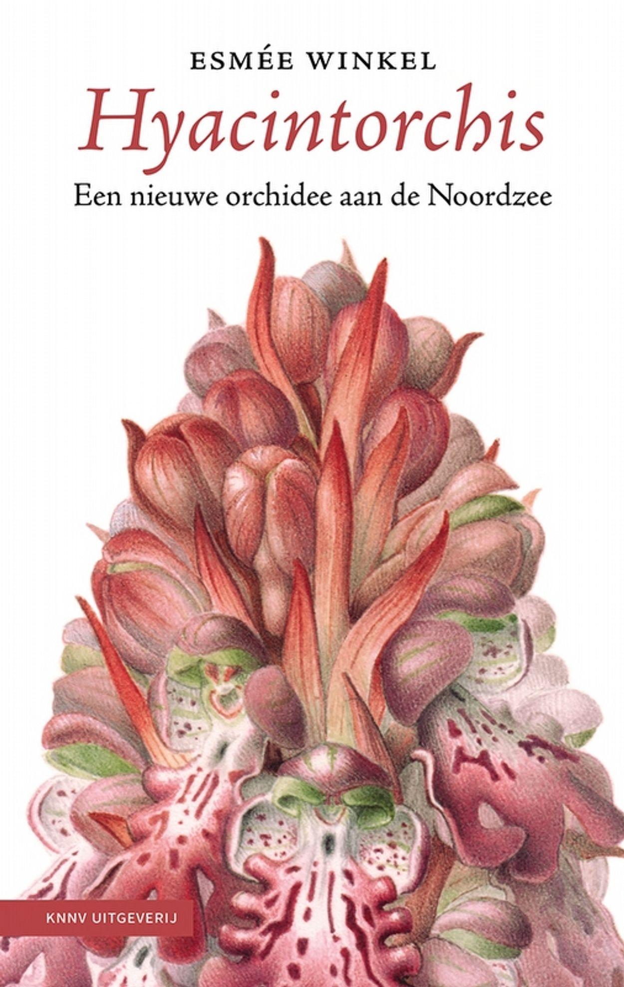 De hyacinthorchis als eersteling