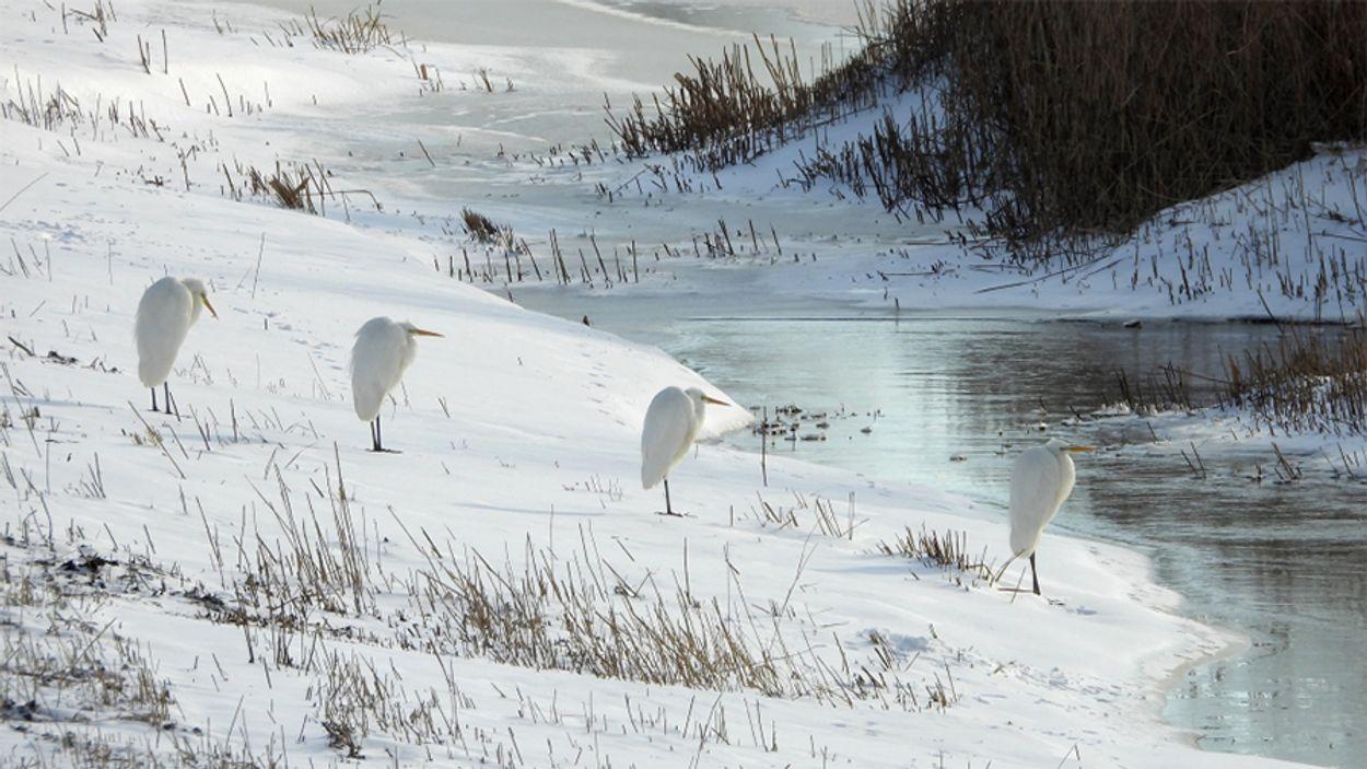 Afbeelding van Fotoserie I Vogels in een witte wereld