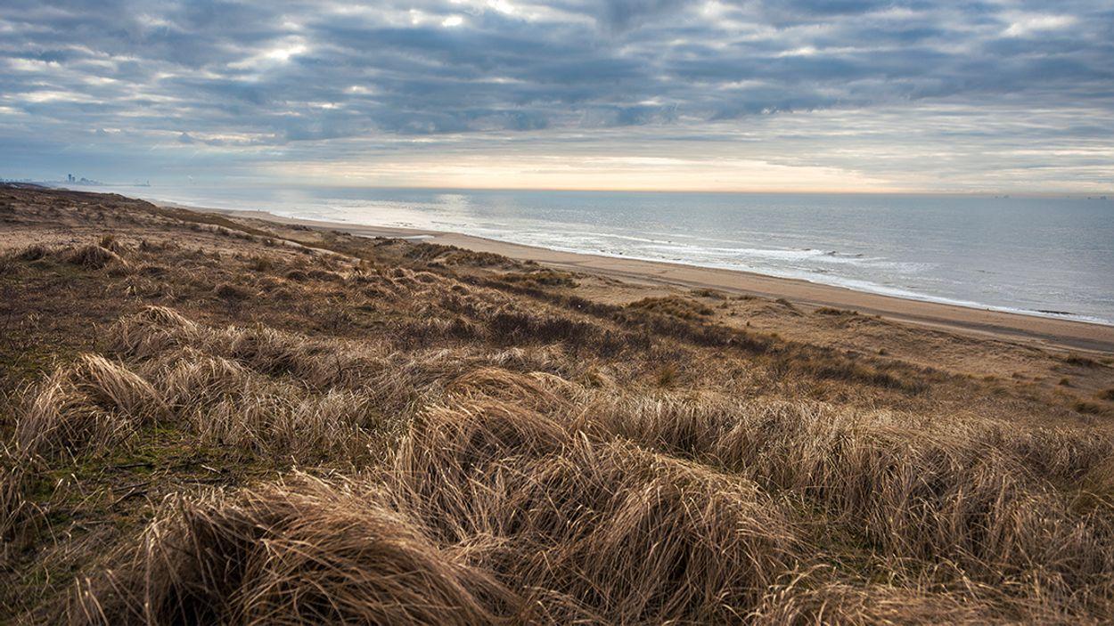 Afbeelding van Den Haag wil status Nationaal Park voor Hollandse Duinen
