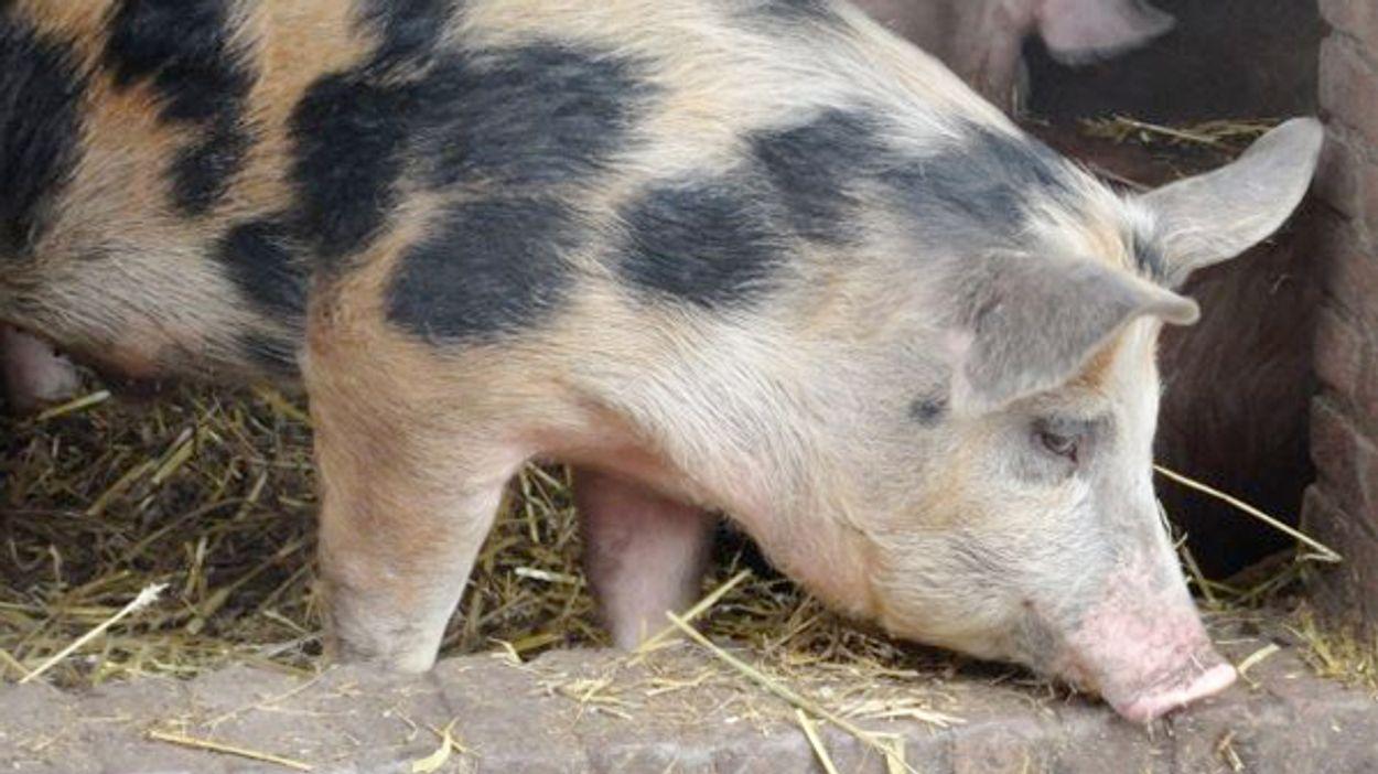 Afbeelding van 'Meer dan helft nieuwe sterrenrestaurants scoort onvoldoende op dierenwelzijn'