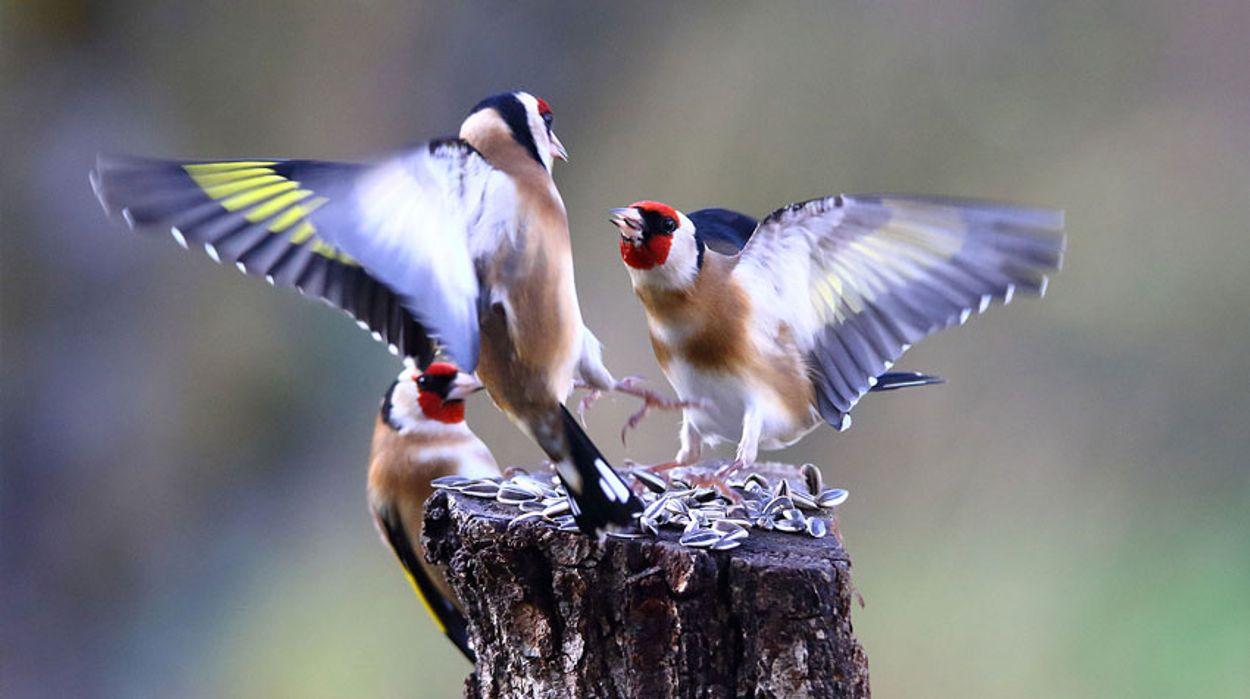 Afbeelding van De vogelvraag van Stijn (11)