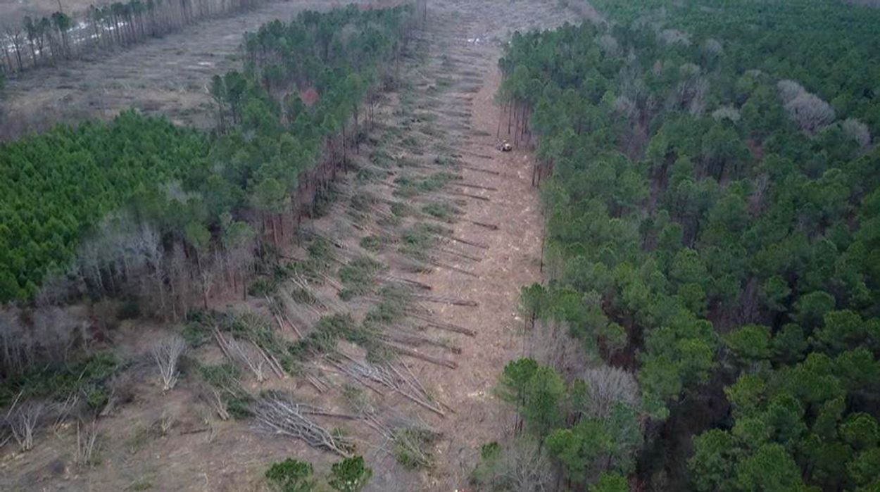 Afbeelding van Vraag naar biomassa funest voor Baltische bossen