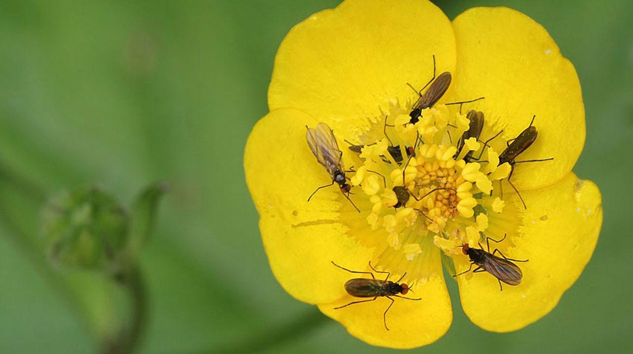 Afbeelding van Bloemen van Darwin, vogelgids, de fenolijn en alle overige onderwerpen