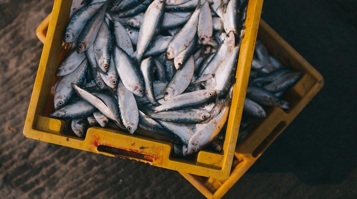 Afbeelding van Hoe duurzaam is vis met MSC-certificaat?