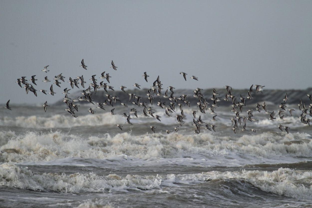 Afbeelding van De vogels van de pier