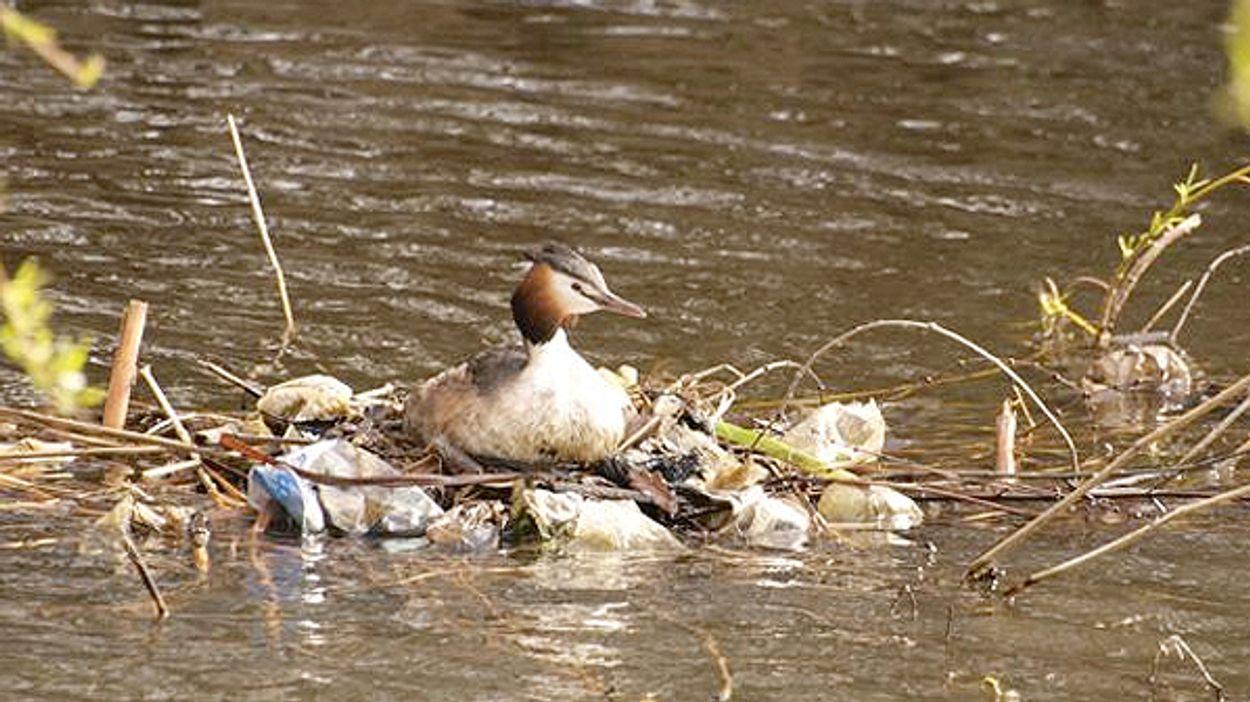 Afbeelding van Recordaantal stukken afval uit rivier gevist: 210.000