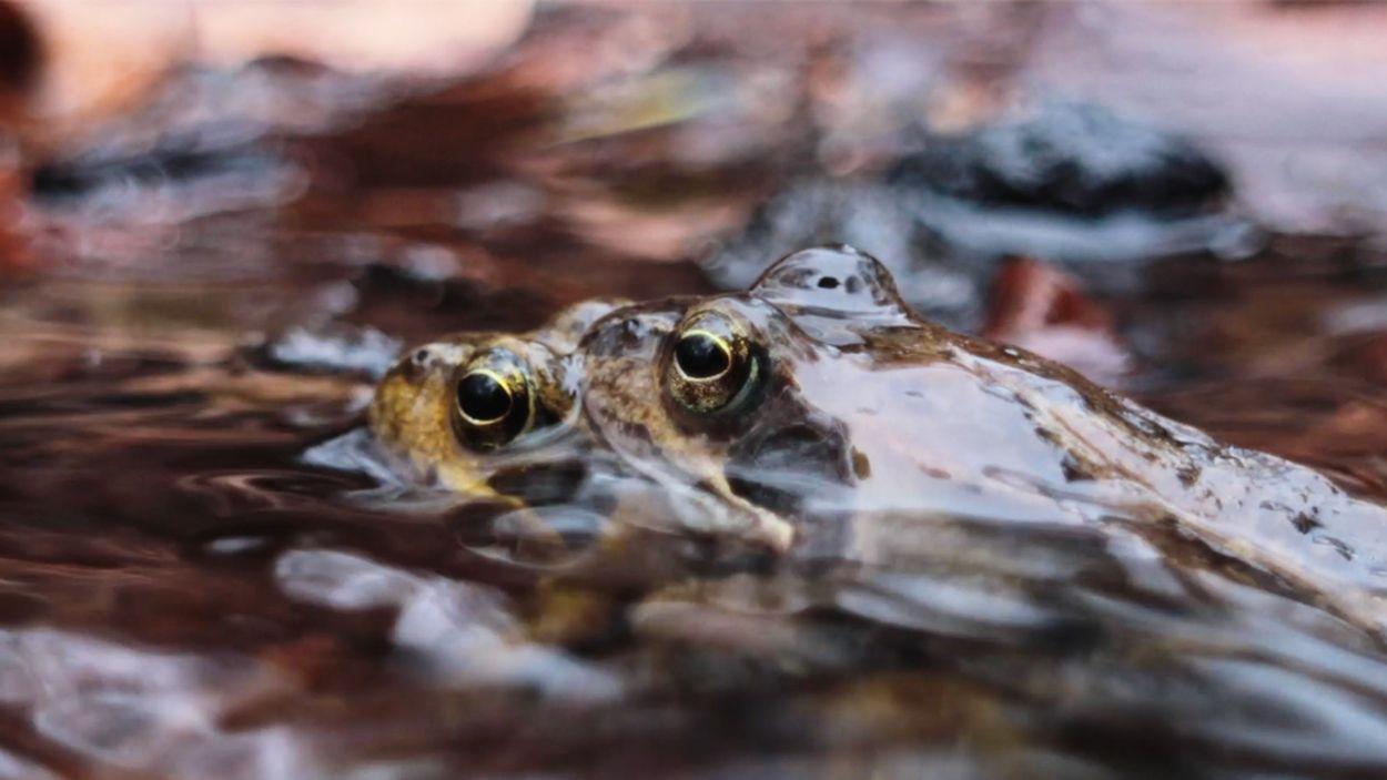 Afbeelding van Mini-biologieles: paring van kikkers | Zelf Geschoten