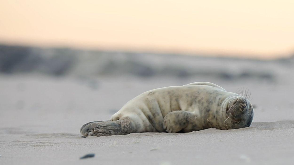 Afbeelding van Luie jonge grijze zeehond | Winnaar Zelf Geschoten