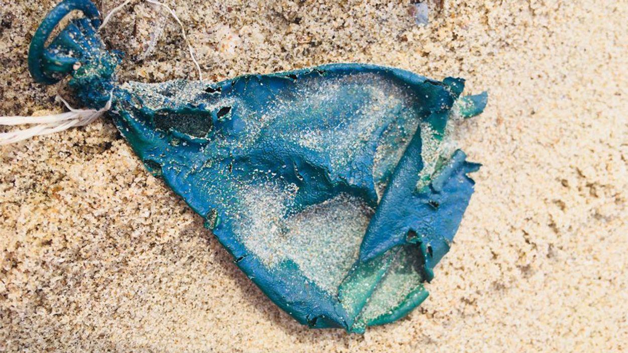 Afbeelding van De Noordzee wordt schoner: kwart minder strandafval dan tien jaar geleden