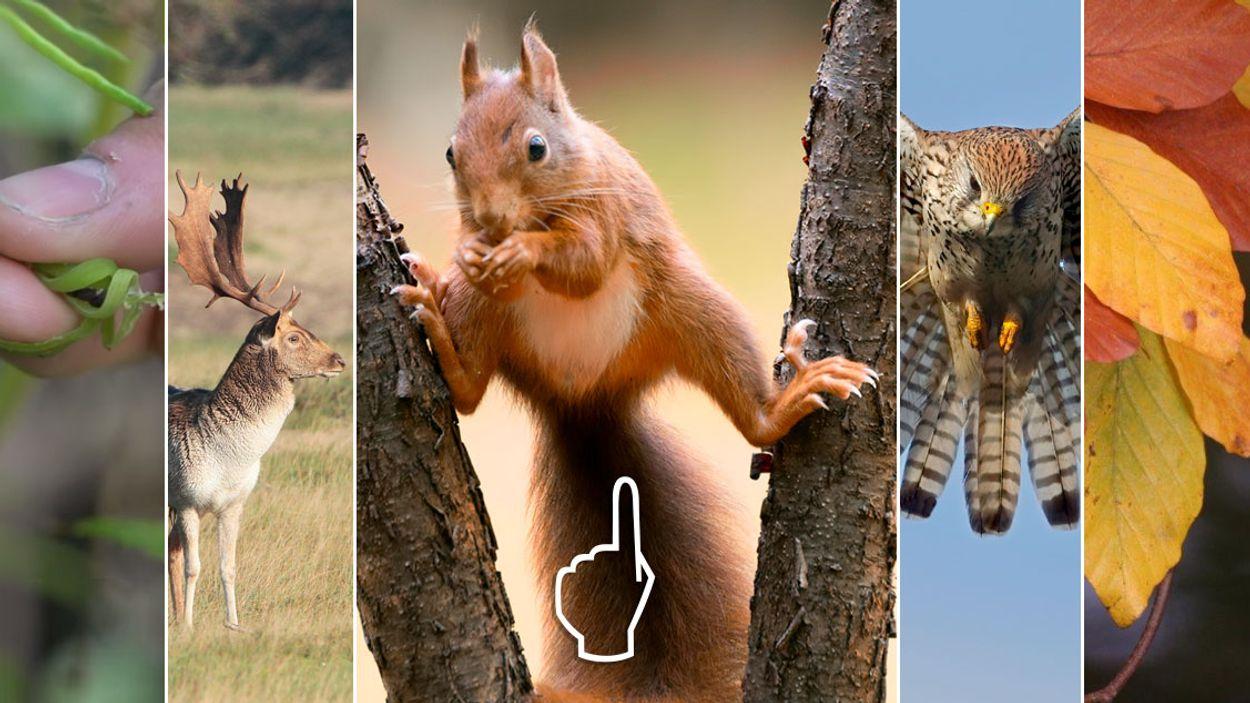 Afbeelding van Van drukke eekhoorn tot burlend damhert | Nu in de natuur