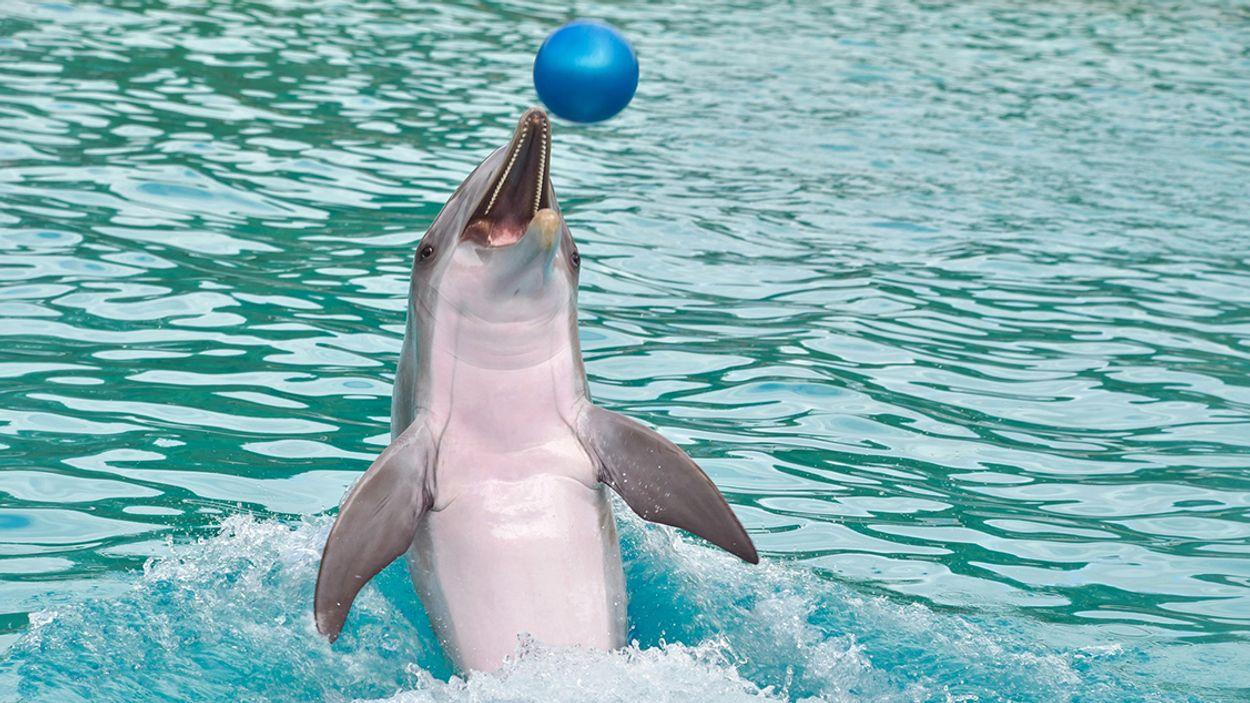 Afbeelding van 'Vermaak met dolfijnen in Nederland is over de datum'