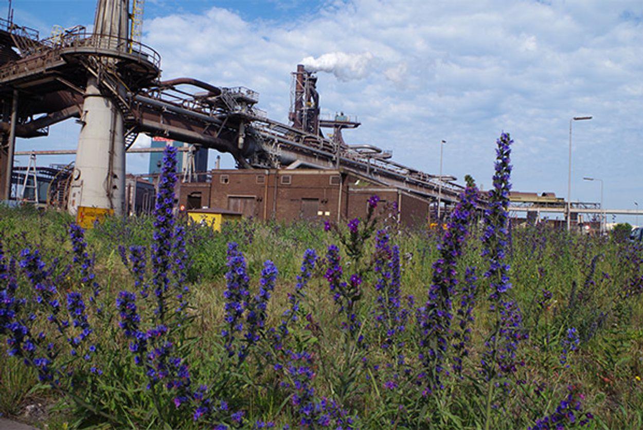 Afbeelding van Schadelijk stoffen Tata Steel overschrijden de gezondheidsnormen