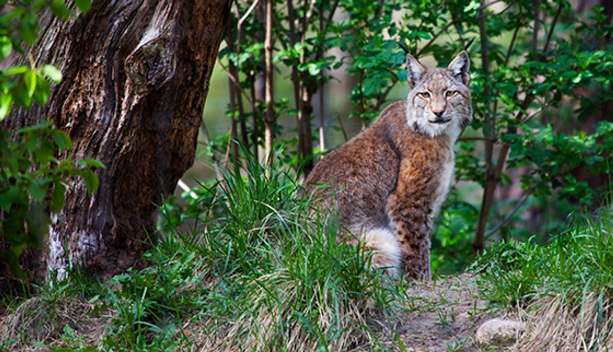 Afbeelding van Lynx, Egelweekend, melklab, de fenolijn en alle overige onderwerpen