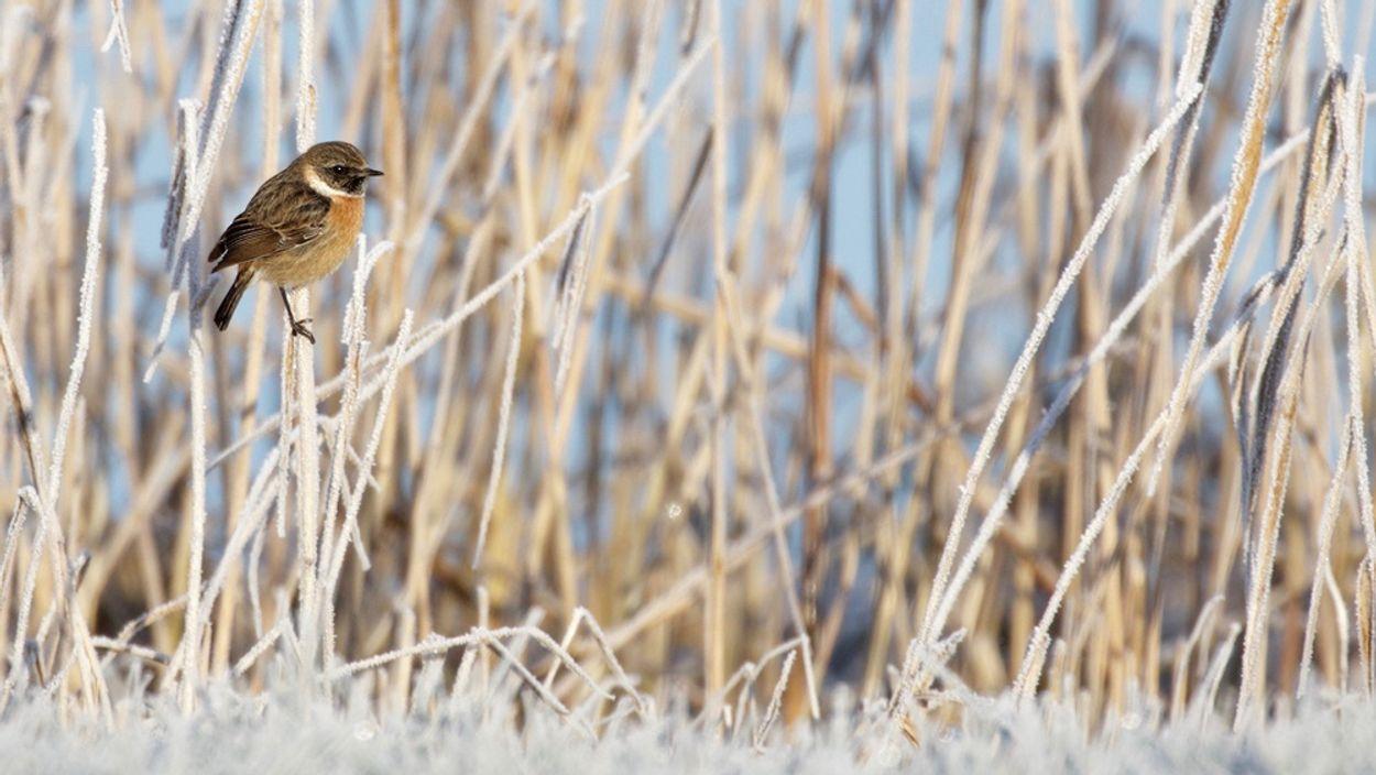 Afbeelding van Winterweer straft trekvogels die blijven plakken