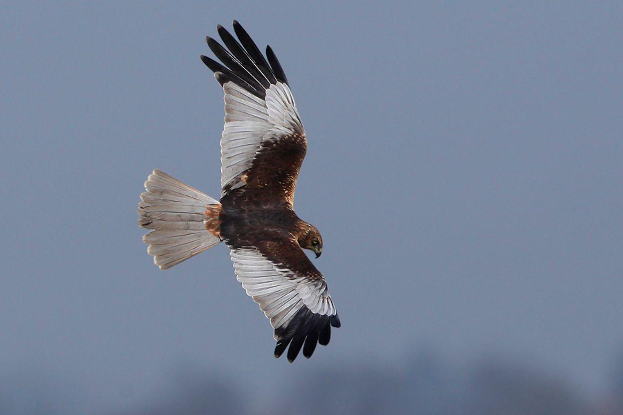 Afbeelding van Vogels weren om vogels te sparen?