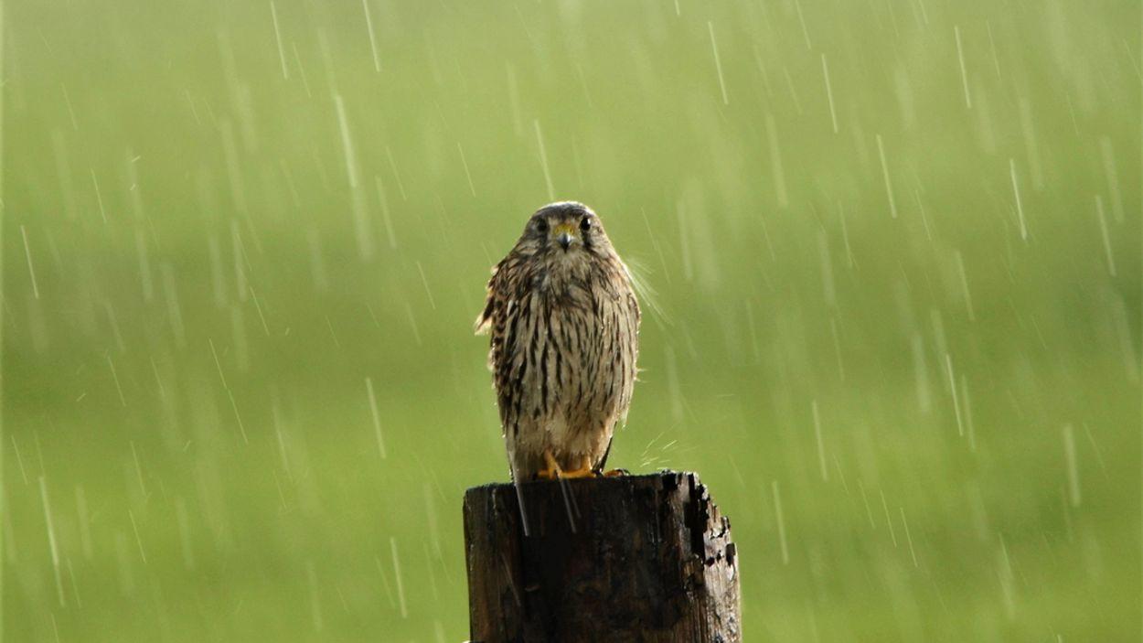 Afbeelding van Niet eerder viel er zo veel regen in de zomer