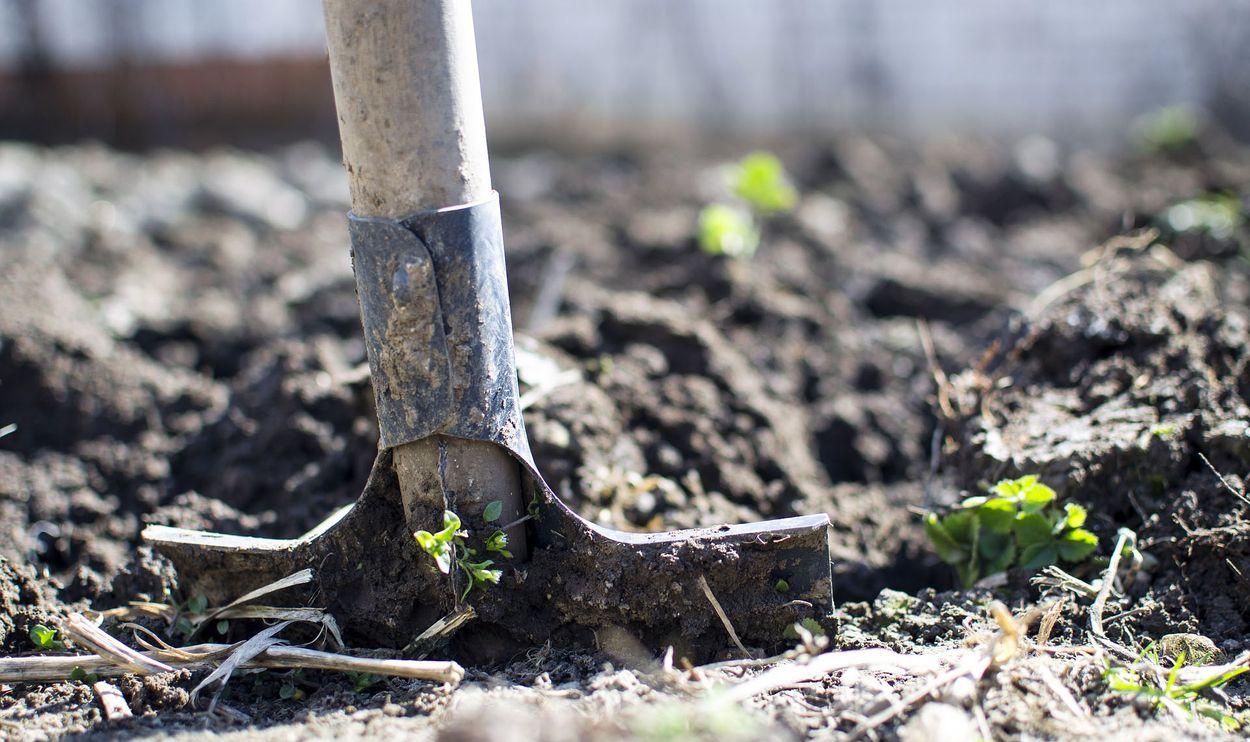 Afbeelding van November is de plantmaand voor de tuin