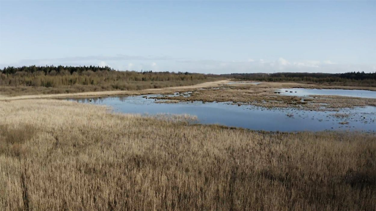 Afbeelding van Meerwaarde van vogelarm gebied