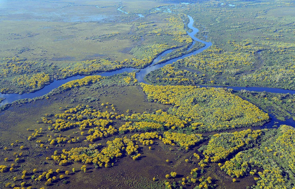 pantanal-5379257_1920