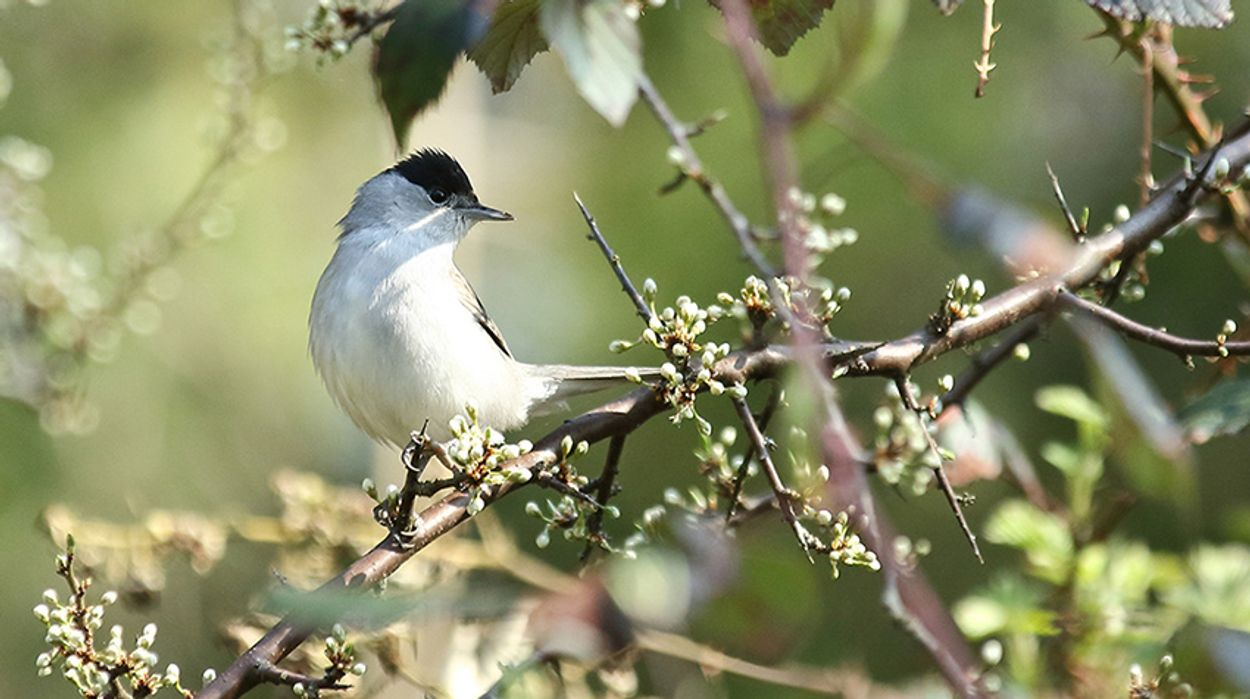 Afbeelding van Vogels op muziek