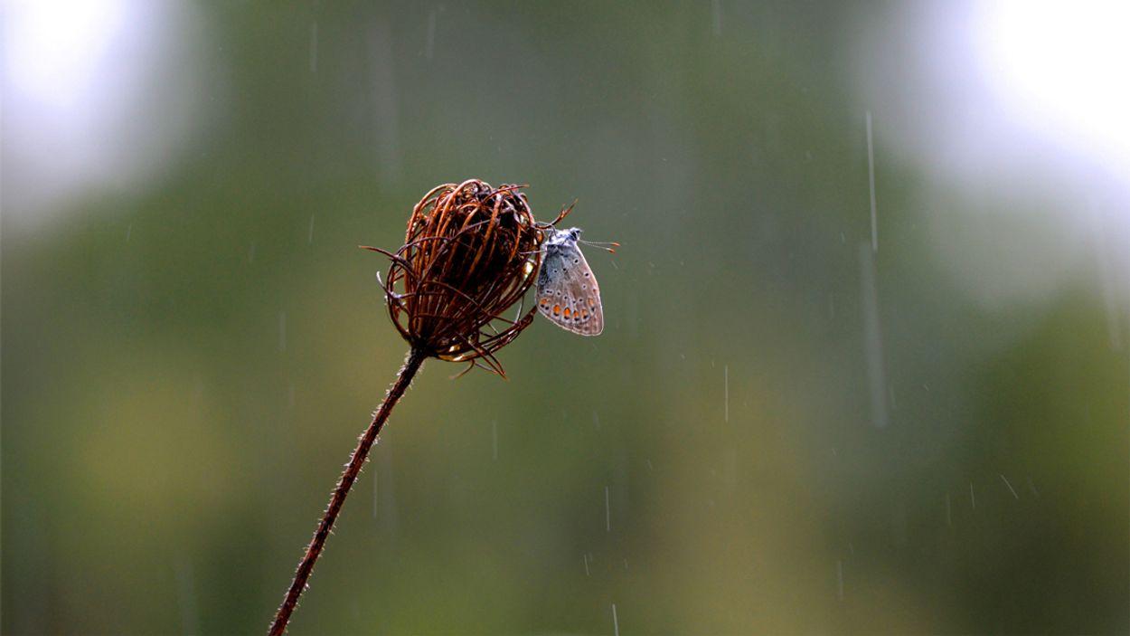 Afbeelding van Hoe insecten het weer kunnen voorspellen