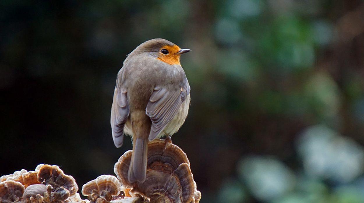 Afbeelding van Vogelnamen in gebarentaal