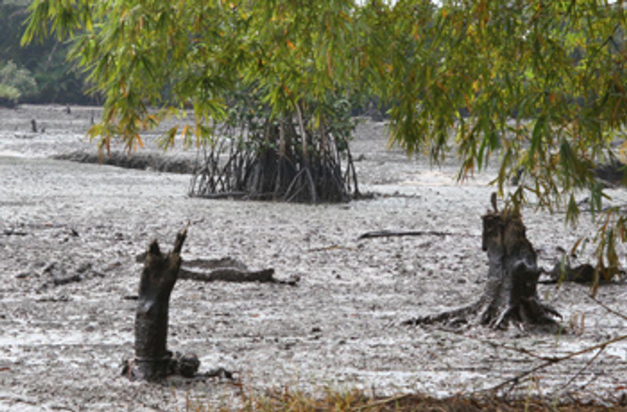 Afbeelding van Shell moet schade betalen aan Nigeriaanse boeren