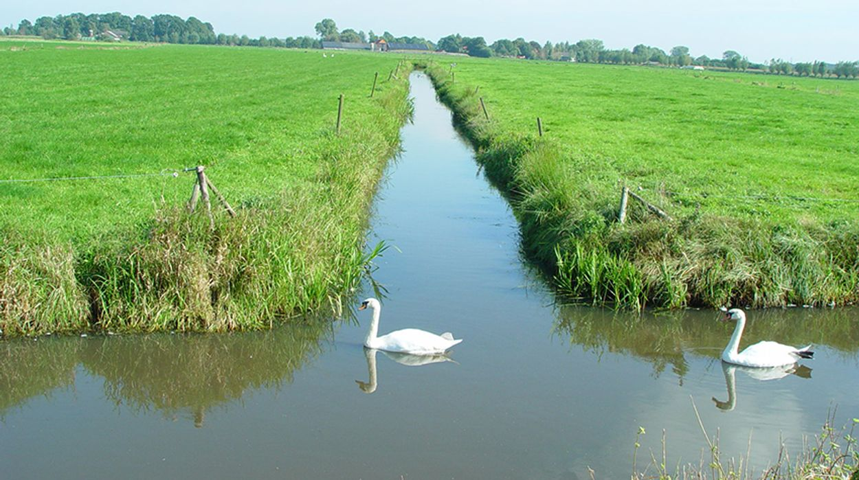 Afbeelding van Waterschappen, voedselbos, broedende vogels, fenolijn en alle overige onderwerpen