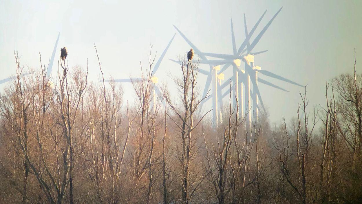 Afbeelding van Natuurorganisaties: plaats duurzame energieprojecten buiten natuurgebieden!
