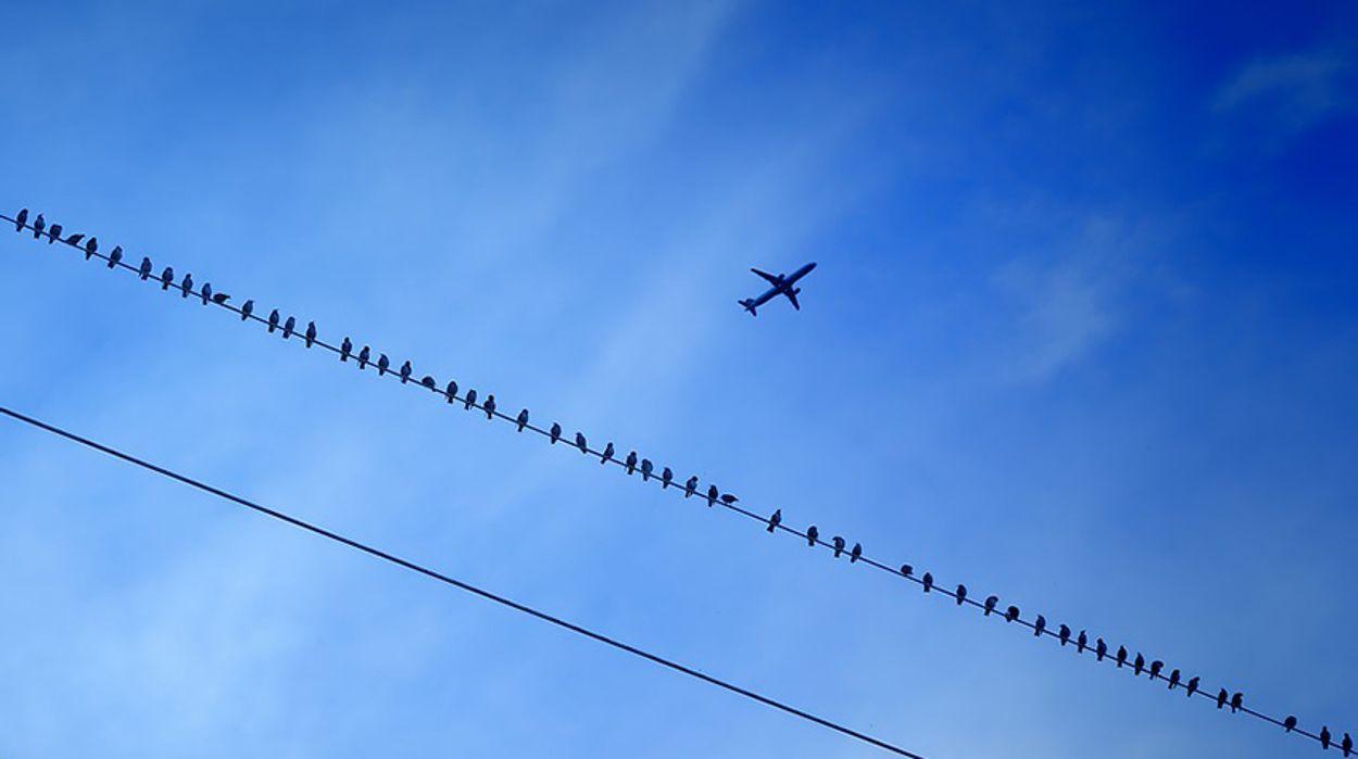 Afbeelding van 'Onderbouwing aanvraag natuurvergunning Lelystad Airport klopt niet'