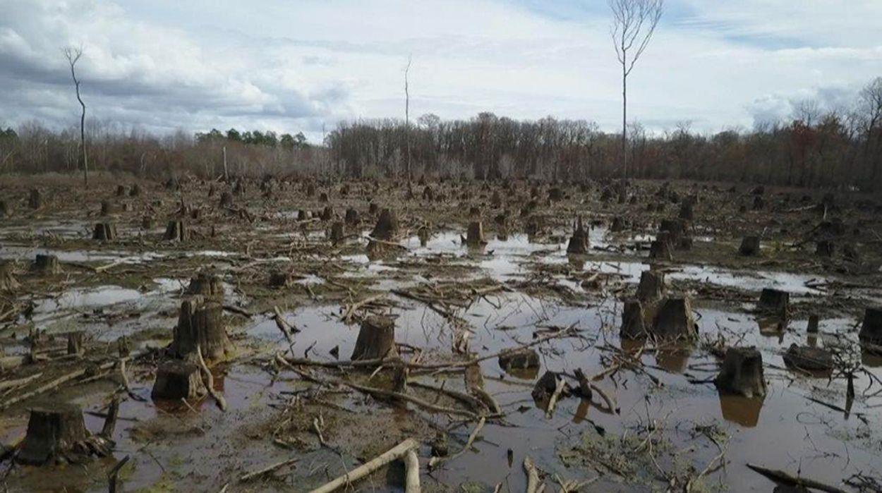 Afbeelding van Milieuclubs roepen banken op geen geld te steken in biomassa