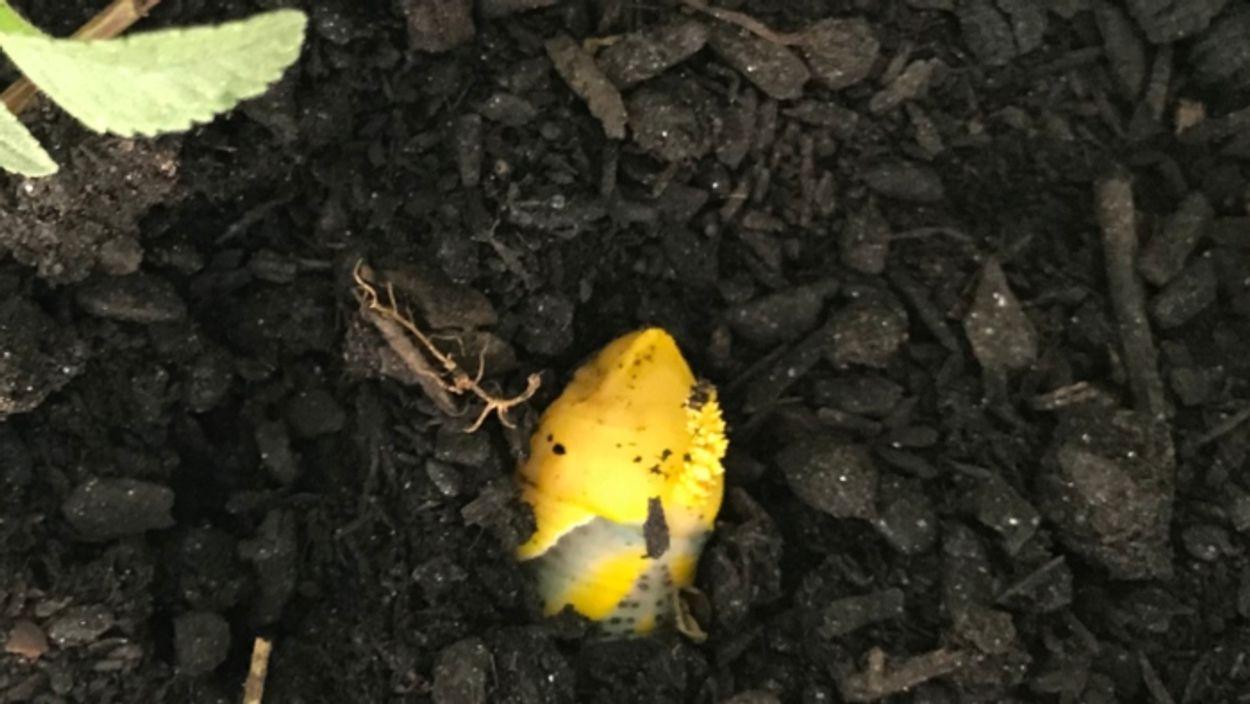 Afbeelding van Zaagsel is voedsel voor bodemschimmels