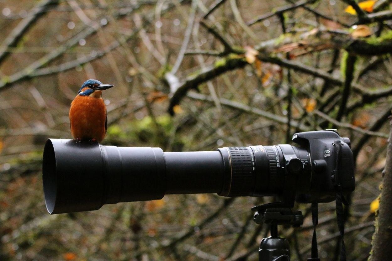 Afbeelding van Natuurfotografie en ethiek