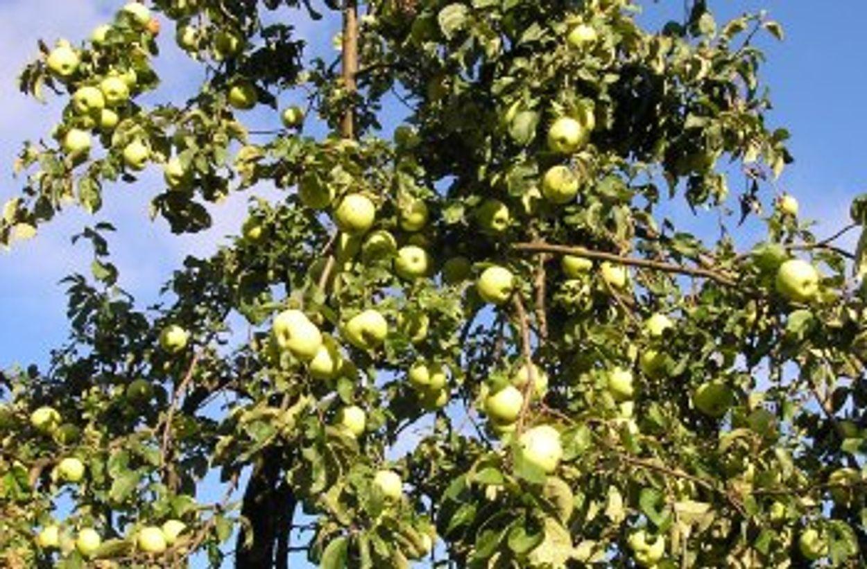 Afbeelding van Groot succes voor de campagne 'Meer Bomen Nu'