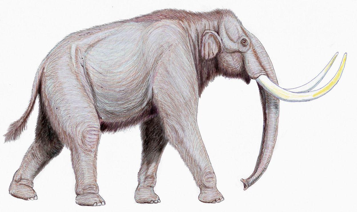 Steppemammoet (Mammuthus Trogontherii)