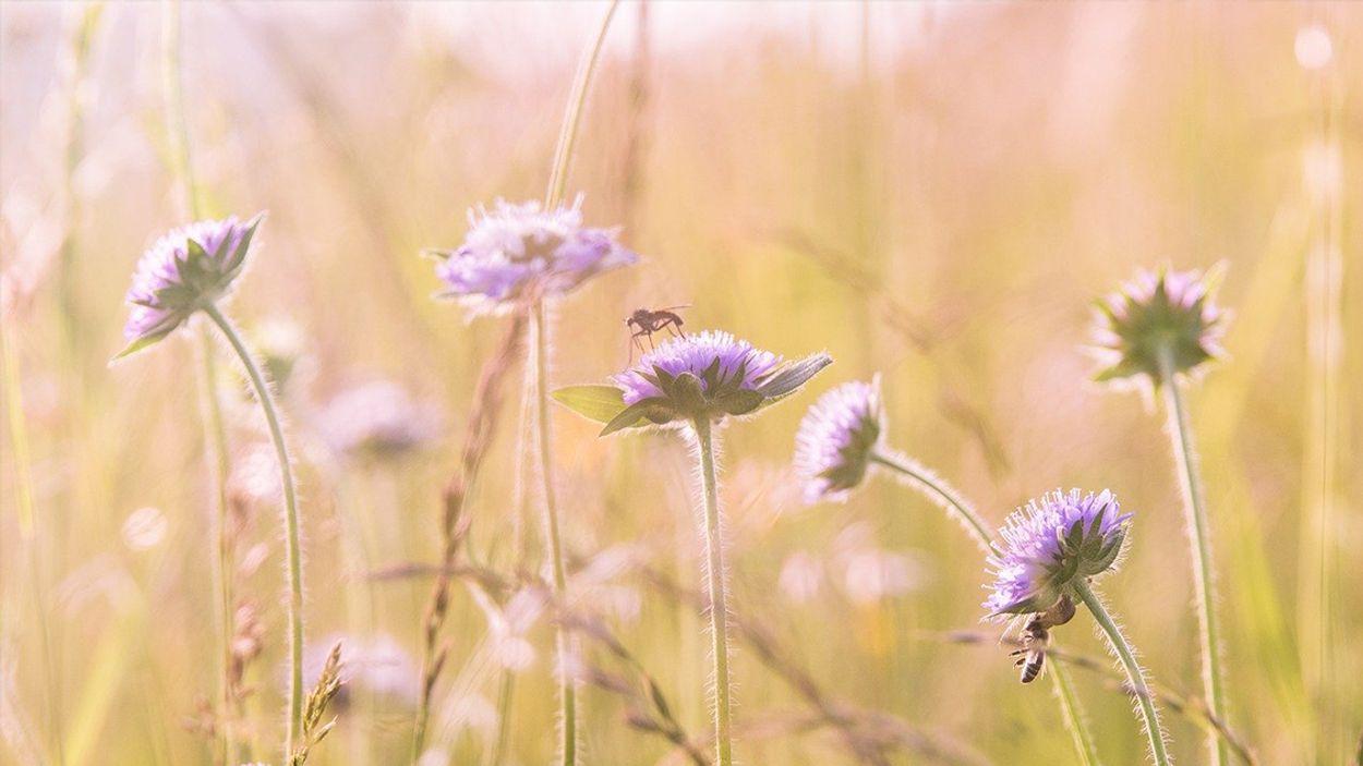 Afbeelding van NS gaat taluds opfleuren met bloemen en kruiden