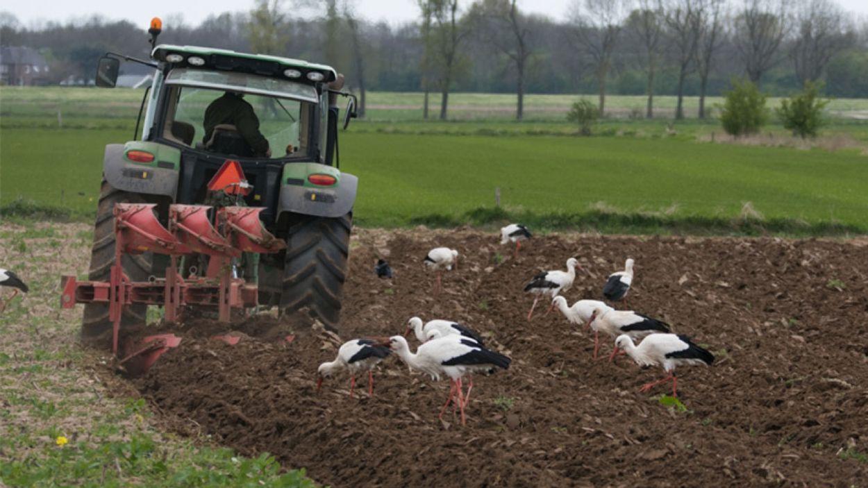 Afbeelding van Kabinet overweegt onteigenen boeren wegens stikstofuitstoot